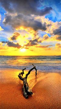 Wither Wood On Spectacular SUnset Beach Landscape iPhone 6 wallpaper