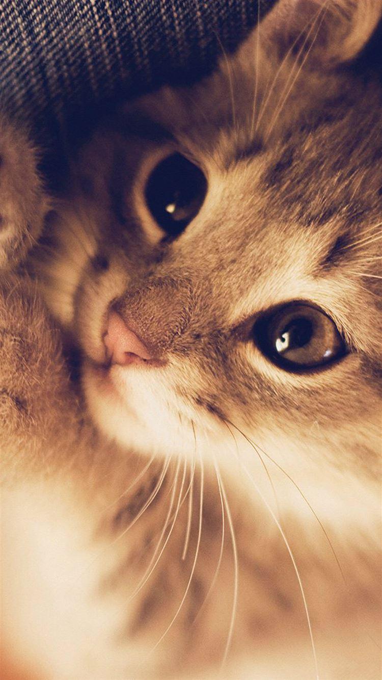... Cute Cat Kitten Nature Animal IPhone 8 Wallpaper.