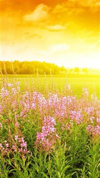 Brilliant Golden Sunshine Spring Flower Bloom Field Nature iPhone 6(s)~8(s) wallpaper