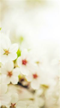 Blossom Cherry Spring Sakura Nature Flower iPhone 6(s)~8(s) wallpaper