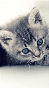 Cute Cat Kitten Macro Gray Background iPhone 6(s)~8(s) wallpaper