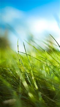 Nature Sunny Blue Sku Green Grassland Field iPhone 6(s)~8(s) wallpaper