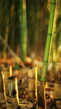 Nature Bamboo Grove Blur iPhone 6(s)~8(s) wallpaper