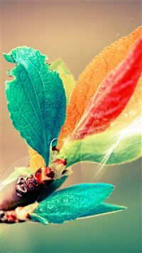 Beautiful Colorful Bud Leaf Branch Silk Line Art iPhone 6(s)~8(s) wallpaper