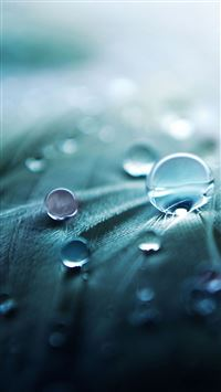 Pure Simple Dew Droplet On Leaf iPhone 6(s)~8(s) wallpaper