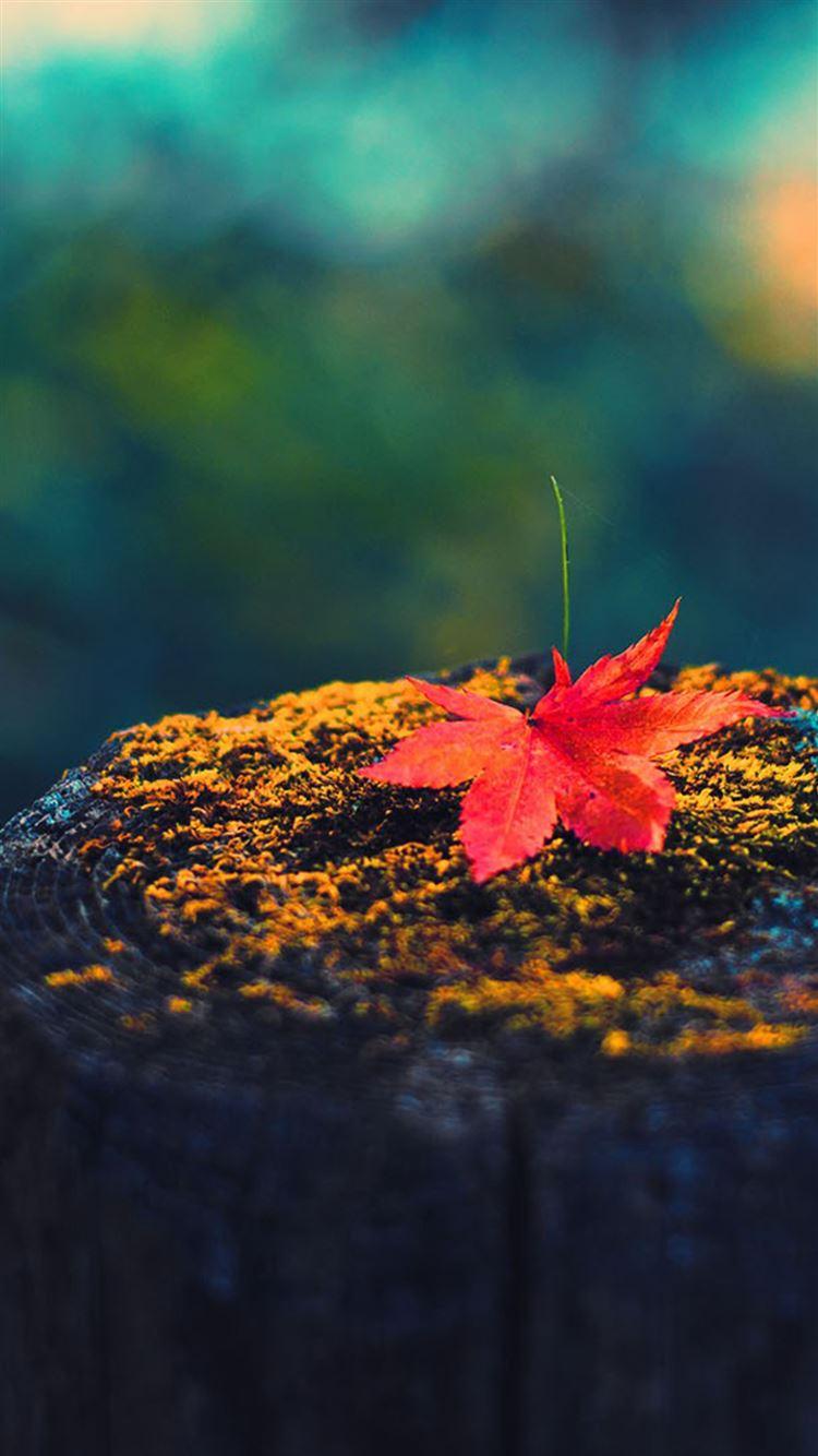 картинки осень на айфон вторые горячие