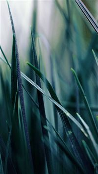 Nature Blue Grass Leaf Bokeh Garden iPhone 6(s)~8(s) wallpaper