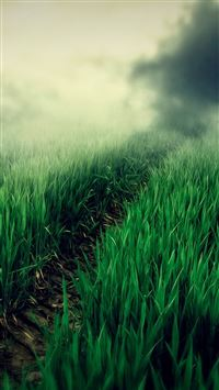 Country Foggy Twilight Grass Leafy Field Path iPhone 6(s)~8(s) wallpaper