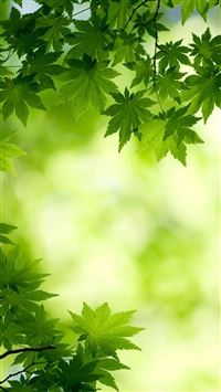 Nature Bright Green Overlap Maple Leafy Branch Blur iPhone 6(s)~8(s) wallpaper