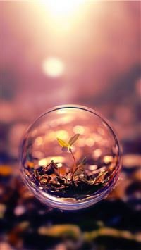 Beautiful Macro Photography Plant Water Bubble iPhone 6(s)~8(s) wallpaper