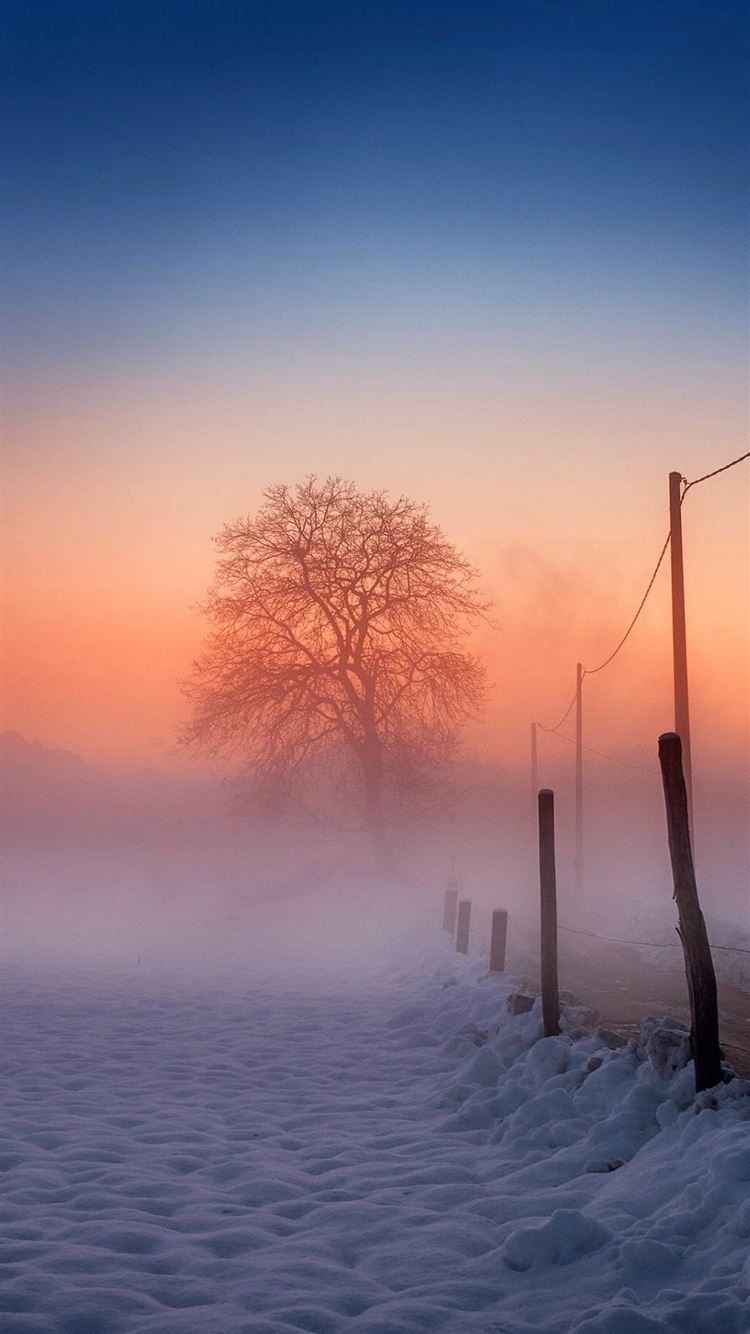 ... Winter Scene Fog Glow iPhone 8 wallpaper.