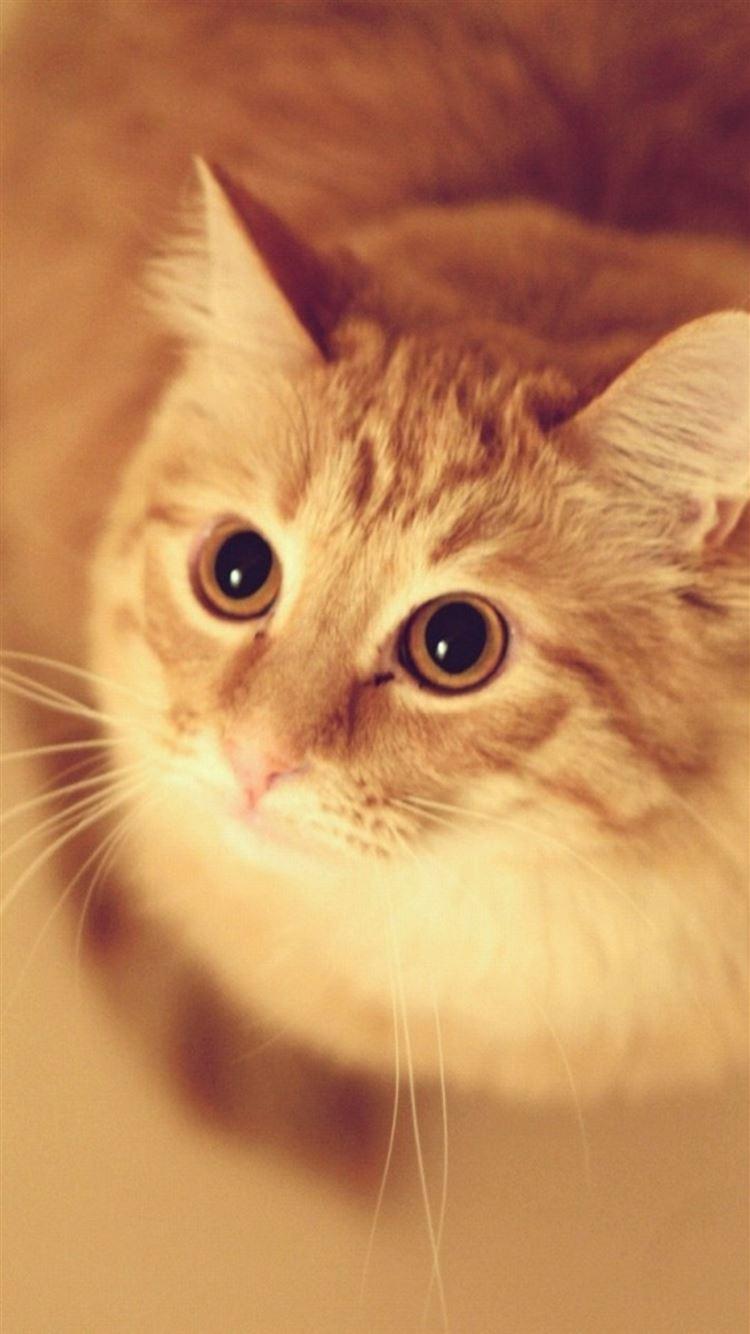 Cute Pet Kitten Cat Animal Blur Iphone 8 Wallpapers Free Download