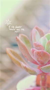 Pure Elegant Pink Fleshy Plant Bokeh iphone 8 wallpaper ilikewallpaper com 200