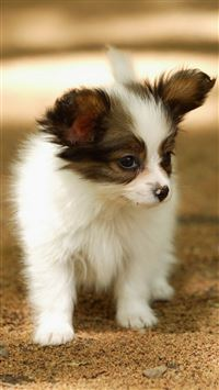 Cute Lovely Puppy Walking Dog Animal iPhone wallpaper