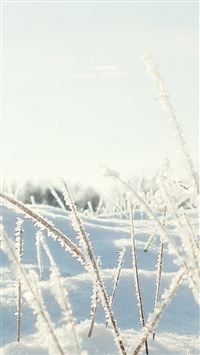 Sunshine Icy Plant Leaf Snow Field iPhone 6 wallpaper