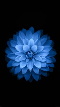 Variant Blue Lotues iOS 8 Background Art iPhone 6(s)~8(s) wallpaper