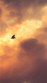 Bird Fly Sky Clouds Red Sunset Nature Animal iPhone wallpaper