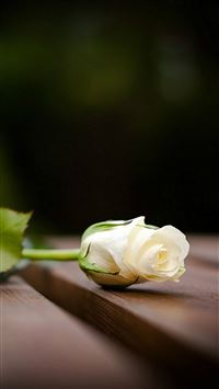 Elegant White Rose On Wood Blur iPhone 6(s)~8(s) wallpaper