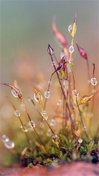 Nature Dew Plant Leafy Grass Blur  iPhone 6(s)~8(s) wallpaper