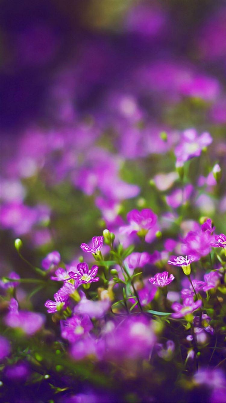 Beautiful Purple Flower Field Blur Bokeh iPhone 8 ...