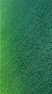 Natural Green Leaf Texture Pattern iPhone 6(s)~8(s) wallpaper