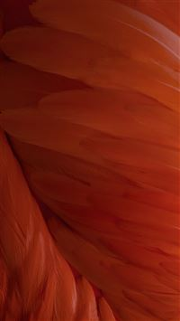 iOS9 Wallpaper Feather Pattern Art  iPhone 6(s)~8(s) wallpaper