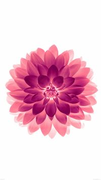 Big Red Flower Blossom Art iPhone 6(s)~8(s) wallpaper