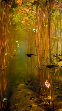 Water Tadpoles Underwater iPhone 6(s)~8(s) wallpaper