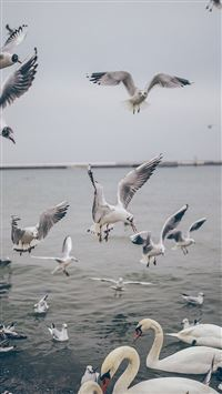 Seagull Sea Beach Port Nature Animal iPhone 6(s)~8(s) wallpaper