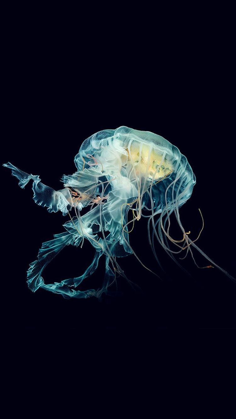 ... Apple Watch Jellyfish Art Nature iPhone 8 wallpaper.