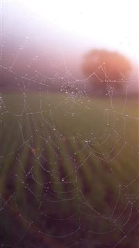 Morning Dew Spider Web Rain Water Nature Flare iPhone 6(s)~8(s) wallpaper