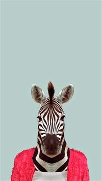 Zebra Funny Animal Portrait iPhone 6(s)~8(s) wallpaper