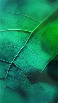 Leaf Flare Nature Green Wood Love Pattern iPhone 6(s)~8(s) wallpaper