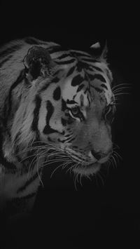 Tiger Dark Animal Love Nature iPhone 6(s)~8(s) wallpaper