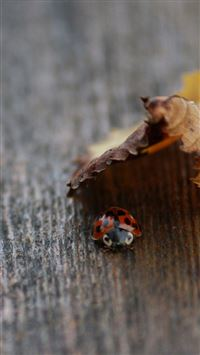 Ladybug Under Leaf Nature Wooden Board iPhone 6(s)~8(s) wallpaper