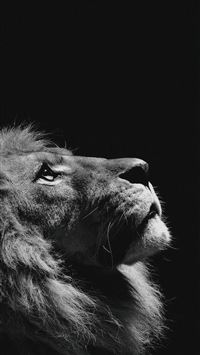 Lion Looking Sky Animal Nature Dark Photo iPhone 6(s)~8(s) wallpaper