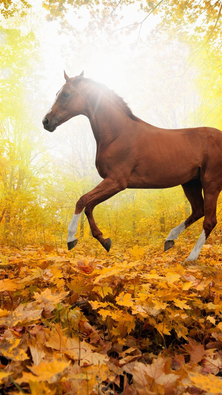 Horse Art Animal Fall Leaf Mountain Red Iphone 8 Wallpapers Free