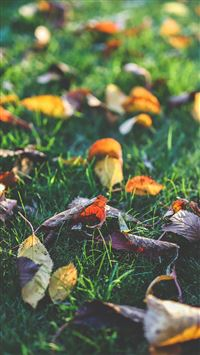 Fall Leaf Nature Green Backyard iPhone 6(s)~8(s) wallpaper