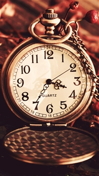 Vintage Watch Pocket Macro Autumn Berries Dry Chain Dial iPhone 6(s)~8(s) wallpaper