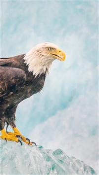 Eagle Bird Predator Ice iPhone 6(s)~8(s) wallpaper