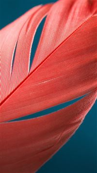 Moto X Style Bird Feather Pattern iPhone 6(s)~8(s) wallpaper