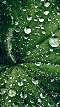 Water Drop On Leaf Summer Green Live iPhone 6(s)~8(s) wallpaper