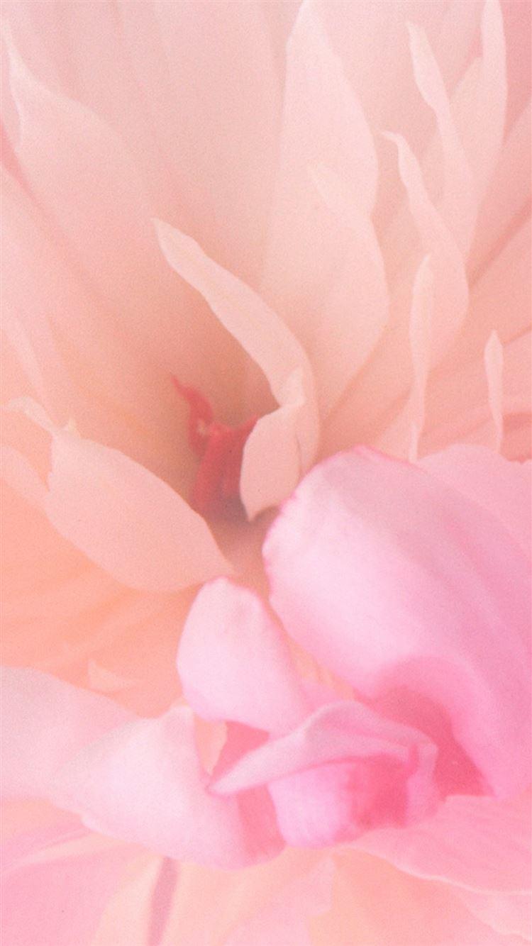 Blooming Pink Flower Iphone 8 Wallpaper Download Iphone Wallpapers