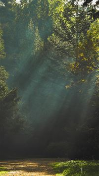 Wood Nature Tree Sunshine Light iPhone 6(s)~8(s) wallpaper