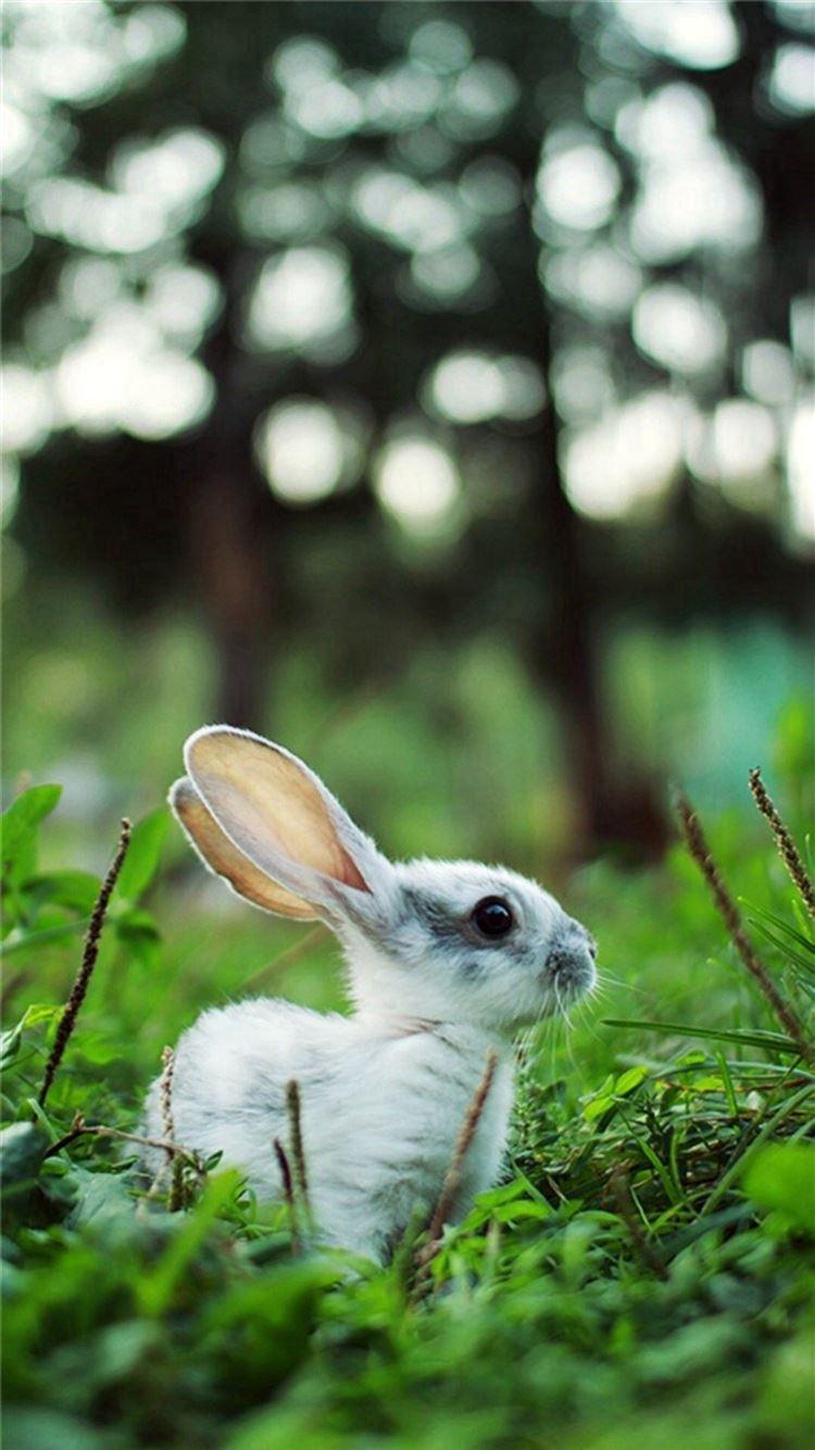 Little Rabbit Grassland Iphone 8 Wallpapers Free Download
