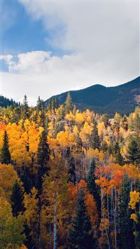Fall Nature Mountain Wood Forest Tree Sky Summer iPhone 6(s)~8(s) wallpaper