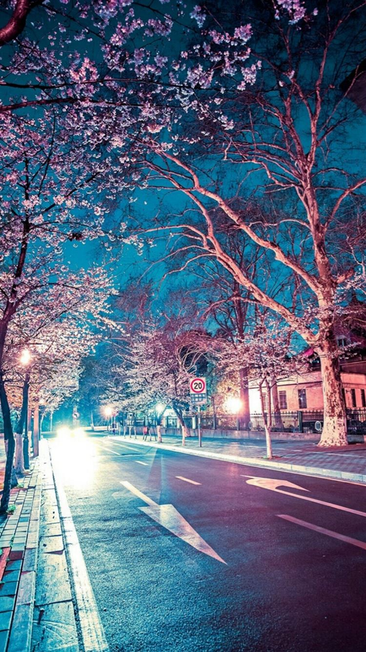 Japanese Street Cherry Blossom Night Scenery Iphone 8
