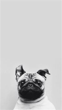Funny Puppy Dog Simple Macro iPhone 6(s)~8(s) wallpaper