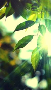 Sunshine Bokeh Leafy iPhone 6(s)~8(s) wallpaper