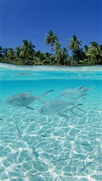 Tropical Pure Sea Fish Scenery iPhone 6(s)~8(s) wallpaper